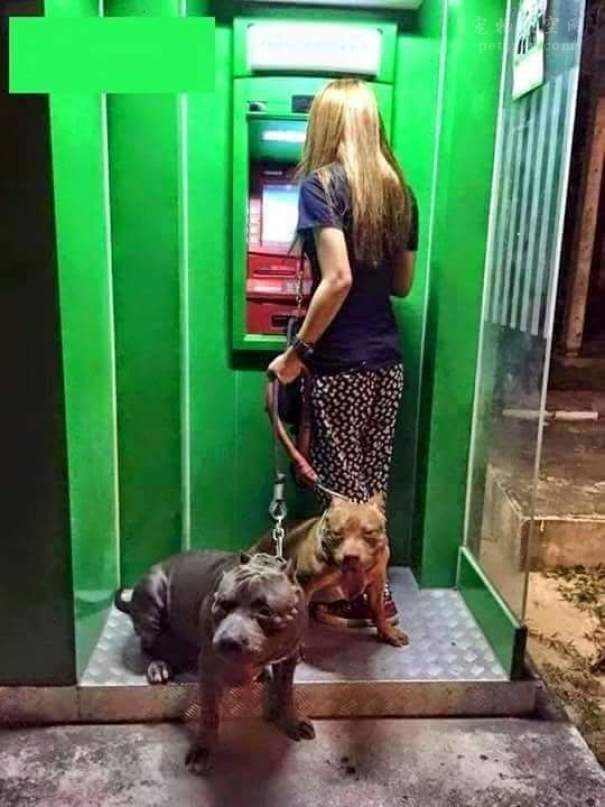 带着狗狗,在ATM取款机前取钱,再也不用担心被抢了(11张)
