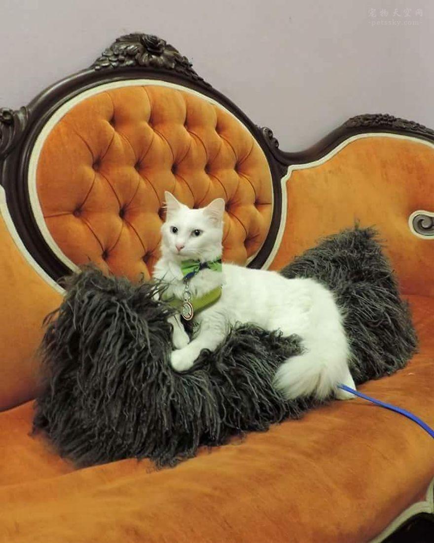 猫咪Boo拥有一个非常大的衣柜,比铲屎官的衣柜还大(20张)