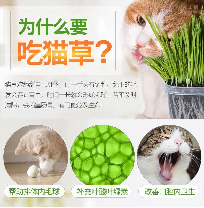 家里种点绿色植物,还有益猫咪的健康
