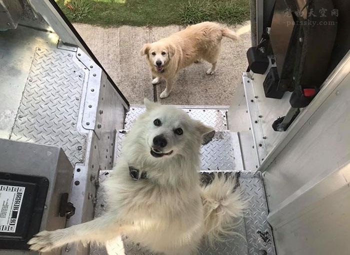 """快递员花了5年时间,来记录工作中遇到的""""暖心""""狗友"""