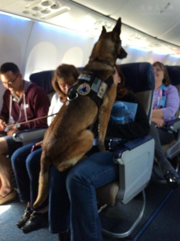 飞机上的动物乘客:狗狗和猫咪(28张)