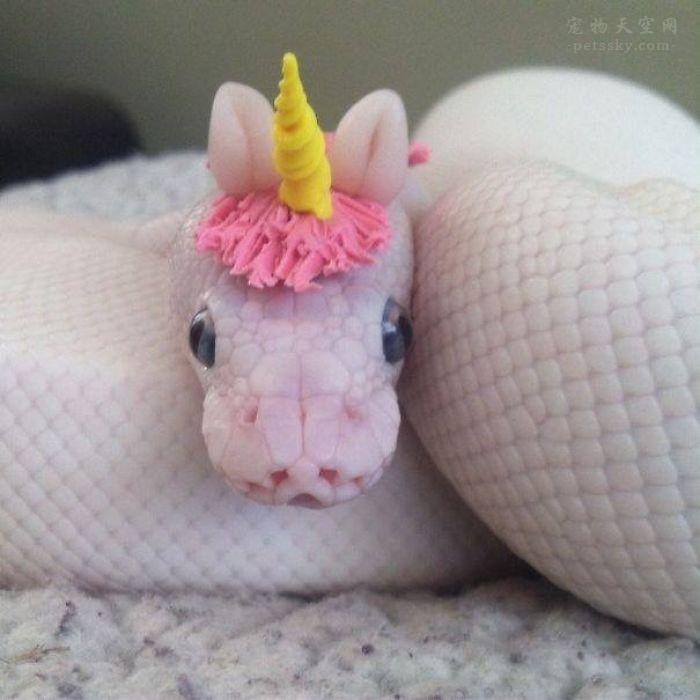 为什么有人很怕蛇,但还是很喜欢看蛇啊?