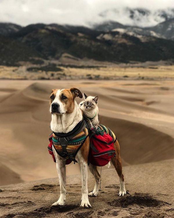 狗狗Henry和猫咪Baloo,过着让人羡慕的旅行生活