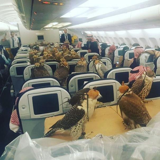 """海南航空试行推出""""客舱运输宠物""""产品,你怎么看?"""
