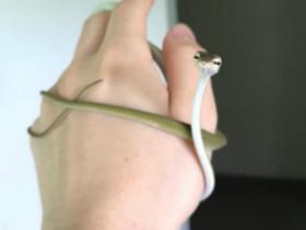 看到可爱的它们,会不会让你减少对蛇的恐惧感?(20张)