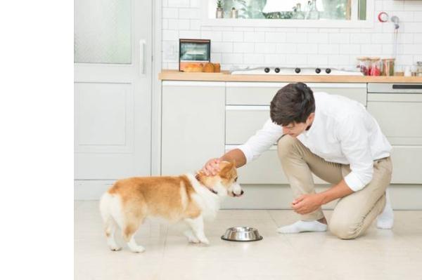 狗狗护食怎么办?如果纠正狗狗护食的习惯?