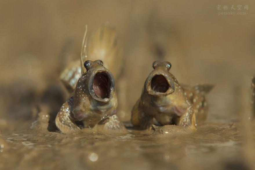 2017年搞笑的野生动物摄影作品