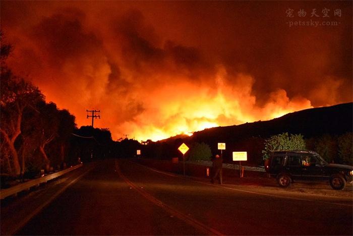 2020 开年:澳洲大火还在烧,12 亿动物死亡,65 万蝙蝠飞出