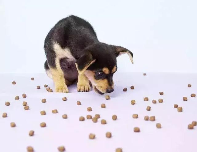 给狗狗挑选狗粮的时候,应该注意些什么?