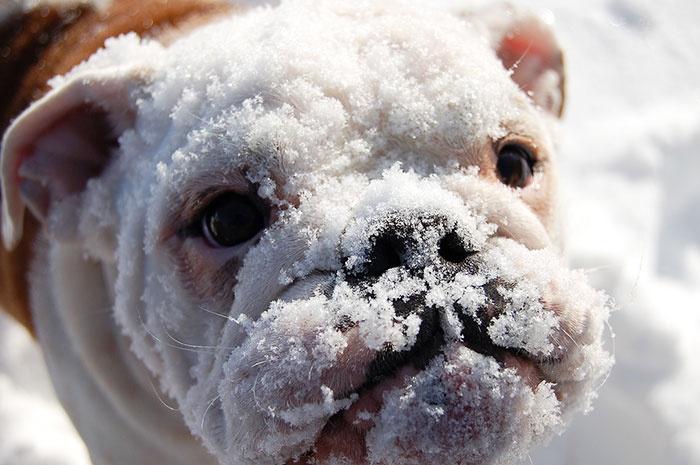 当宠物第一次见到大雪时,它们的表情让人感到暖心(30张)