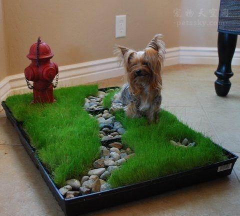 狗狗经常在家随地大小便,如何训练幼犬定点大小便?