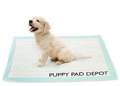 怎么样教狗记住在卫生间上厕所?