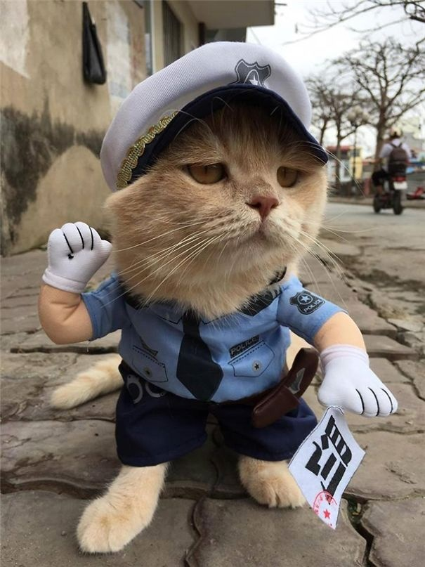 """越南的街头一只""""卖鱼""""的猫咪,意外地爆红网络,造型太可爱"""
