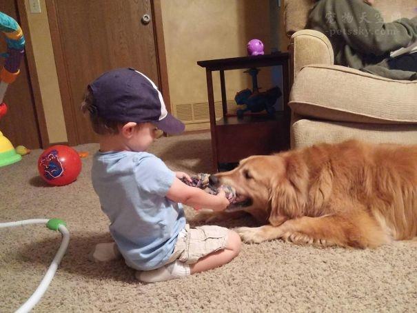 不文明养狗行为与投毒杀狗行为,谁更应受谴责?
