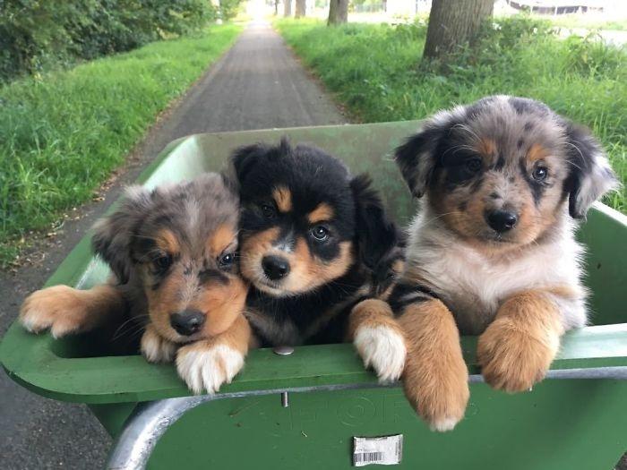 为了减少伤害,你赞成城市里杜绝养狗吗?
