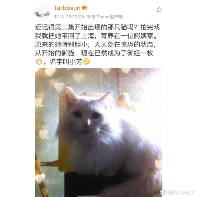 孙俪晒出与《甄嬛传》中白猫的重逢照,勾起网友的回忆
