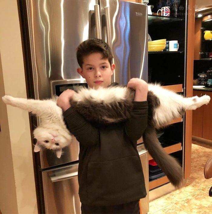 """身体柔性性非常好的猫咪,仿佛""""融化""""了一样"""