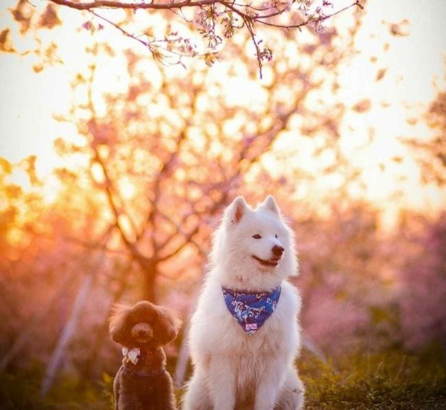 """与宠物一起出去""""踏青"""",享受美好的春光"""