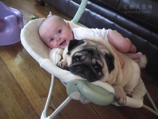 小区业主因为养狗不拴绳而发文互怼,你怎么看?