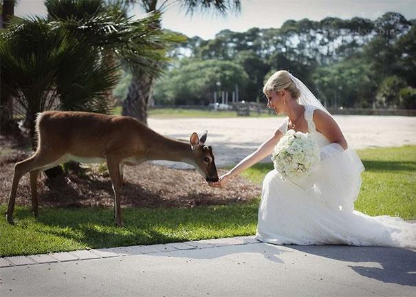 这些野生动物与网友亲近的照片,让人感受到一种幸福感!(39张)
