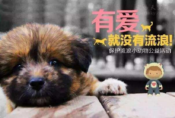 大家对流浪宠物的看法是什么,会选择领养还是购买?