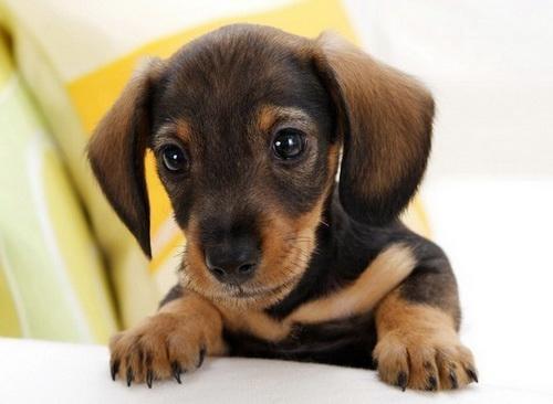 狗狗的眼睛周围发红了,可能是什么原因导致的?