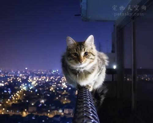 猫咪为什么会喜欢挠沙发呢?怎么改变猫咪挠沙发的习惯?