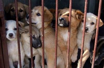 为什么有很多人,愿意做流浪宠物收容中心?
