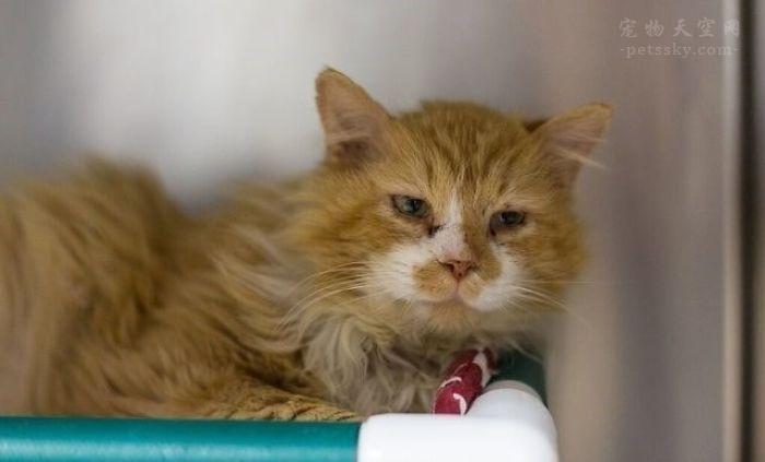 怎么看待有些猫主人把猫送去安乐死的行为?