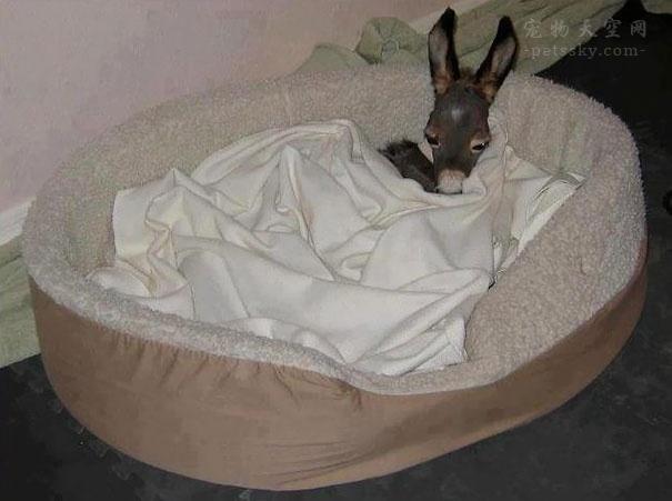 毛驴宝宝的样子太可爱了!有人喜欢小毛驴吗?(15张)
