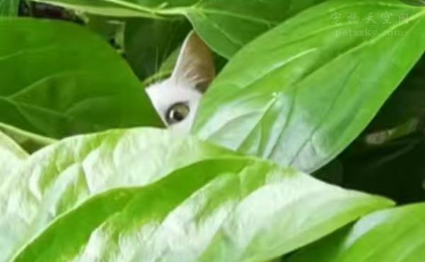 好灵性的小猫!被关门外后,无师自通爬上大树想进二楼主人房间!