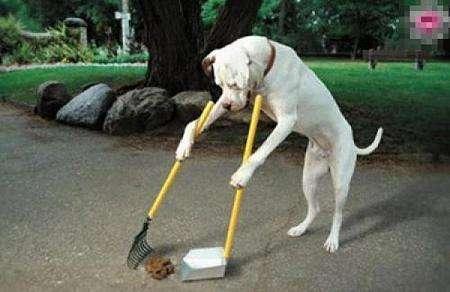 任由自己的狗狗在小区随地大小便,你怎么看?