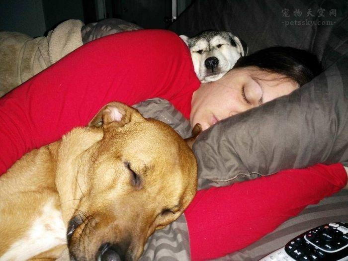 楼下养狗,犬吠不止影响休息怎么办?