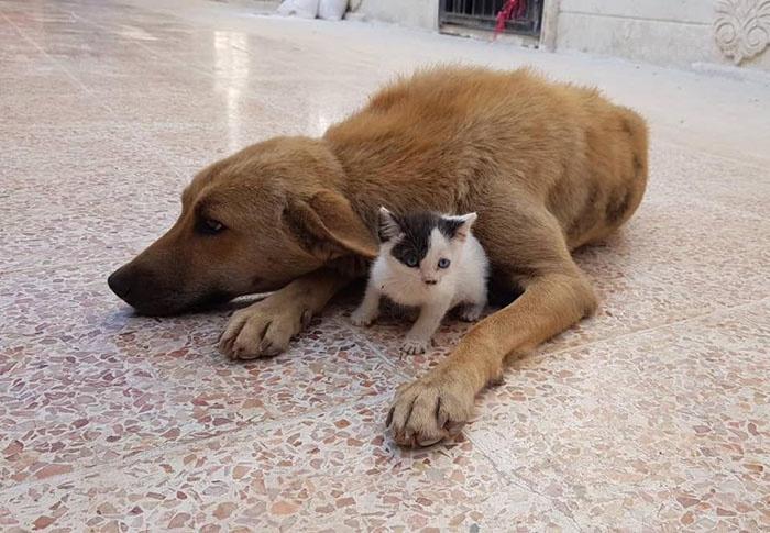 当你失去你的宠物时,是怎样的心情?