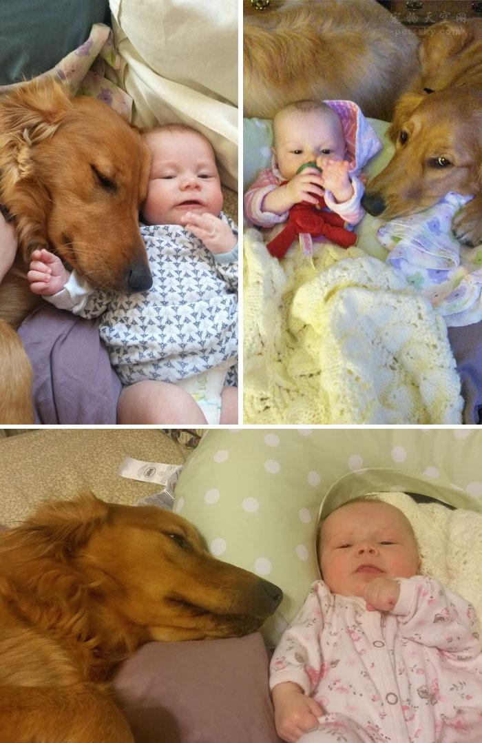 被狗狗感动的那一瞬间,这就是很多人喜欢养狗的原因(二)