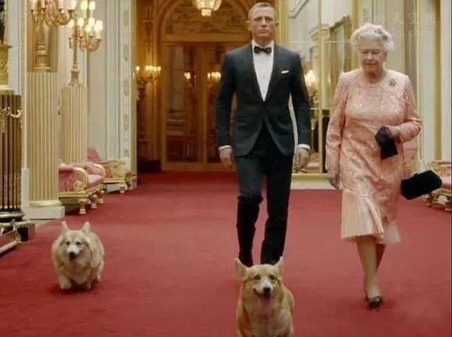 英女王最后一只柯基犬离世:相互陪伴达74年