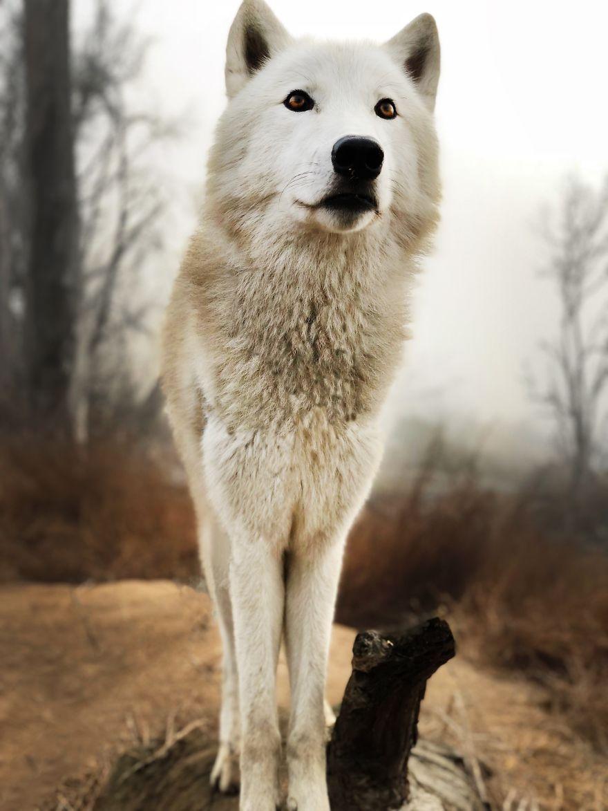 """网友分享自己带着狗旅行的照片,很多人留言:""""这是狼!"""""""