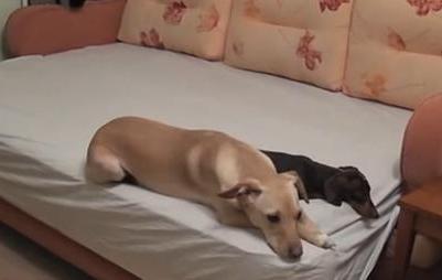 平时很乖的狗狗,夜里叫了一整夜可能是什么原因?