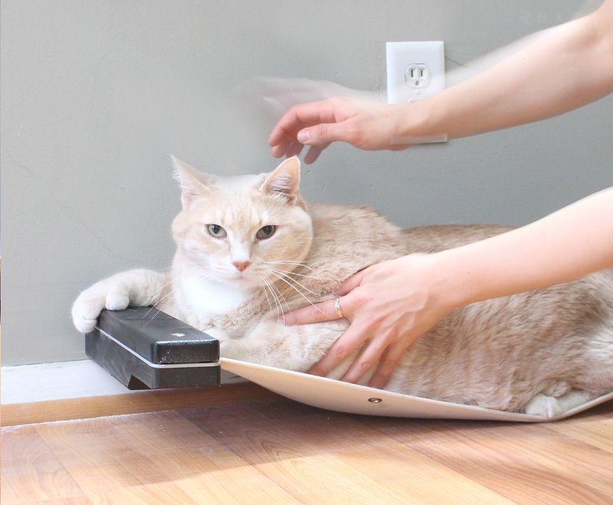 情侣领养了一只15公斤重的橘猫,并分享减肥日记(22张)
