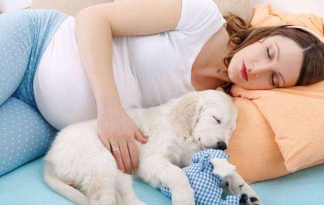 怀孕之后,就要送走家里的宠物吗?