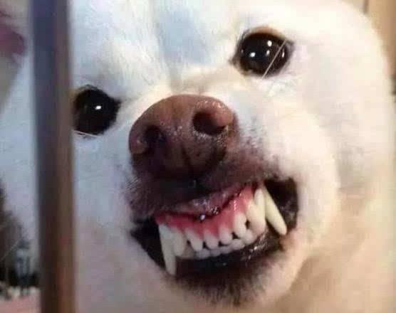 有人说狗的智商很高,是人类的忠诚朋友,那为什么它会咬人?