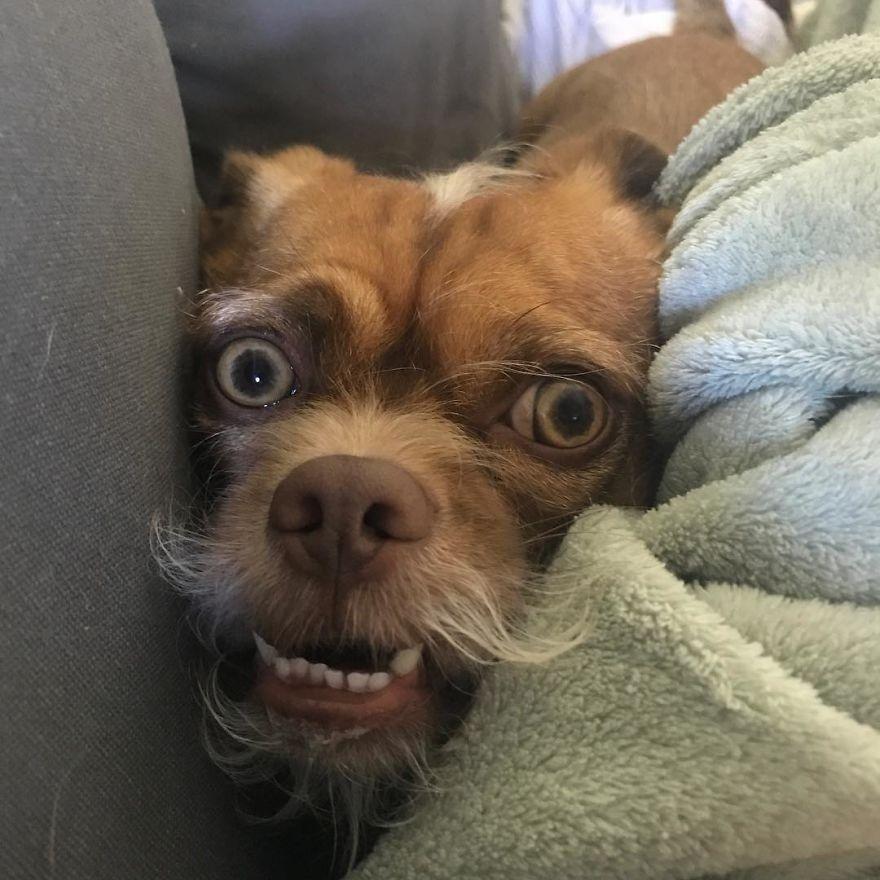 这条串串狗长得像一个小老头,它的照片被很多网友用作表情包