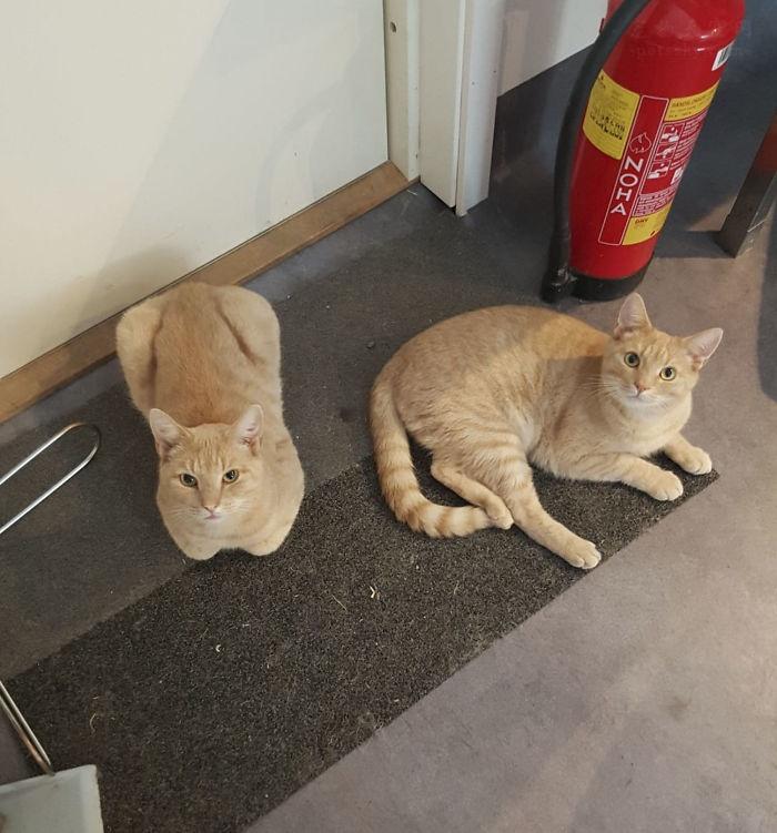 女子厌倦了在猫咪救助站的工作,网友看了照片,给她打气和加油