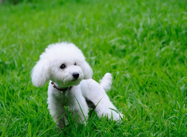 美国加州颁新规:禁止贩卖宠物,宠物店只能卖获救动物