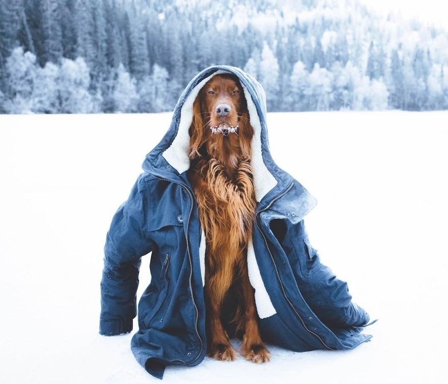 铲屎官的日常:一个人和一条狗,走在挪威的森林里(12张)
