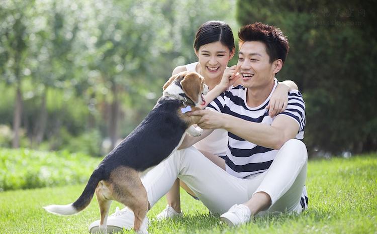 狗狗拉肚子怎么办?补充宠物益生菌调肠道增强免疫