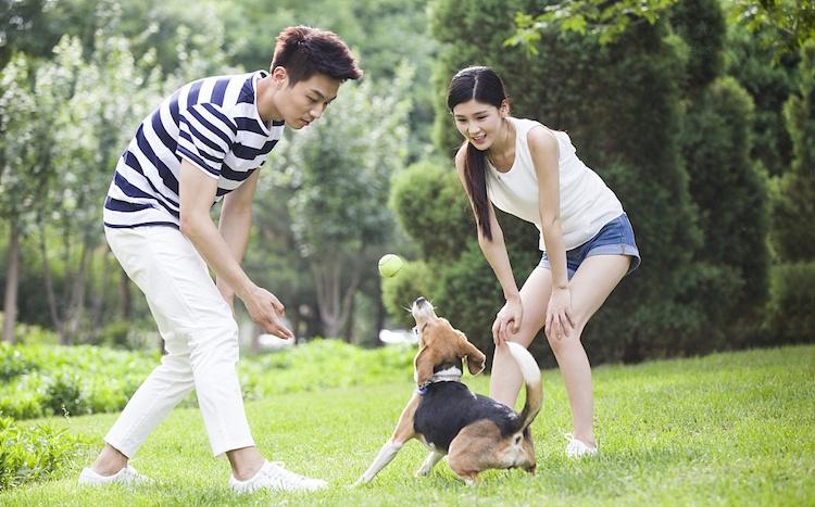 如果老公不让养狗,而老婆又特别喜欢狗怎么办?
