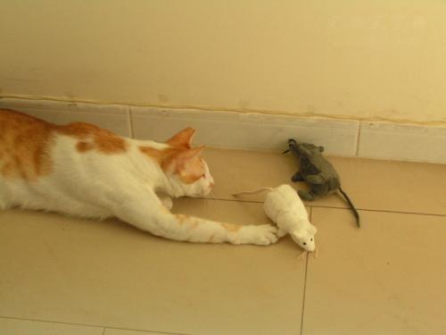 现在的一些猫,为什么不逮老鼠?