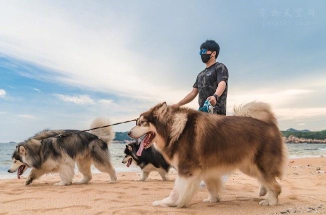 养狗的人越来越多,喜欢养狗的一般都是什么人?