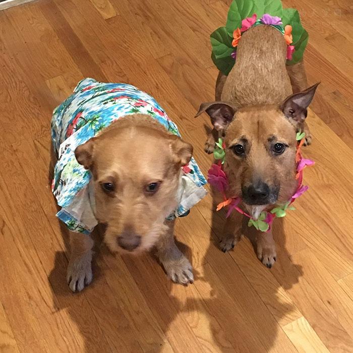 """只因在救助站里多看了一眼,家里就多了一条""""双胞胎""""狗!"""